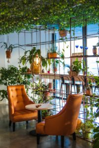 There are two orange chairs, and plenty of houseplants decorating a room. This is an example of the popular interior design trends in New Jersey.